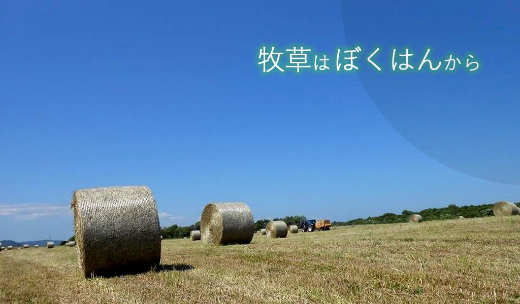 北海道産チモシー(コンパクト)